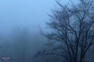 Kurt Griffith - Fog Photo